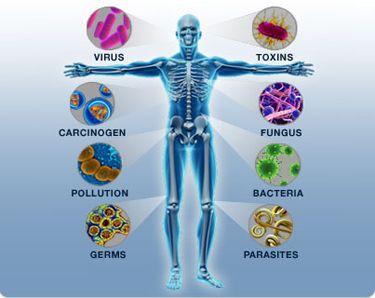 boost-immune-system-kratom