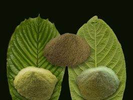 Kratom for Weight Loss Benefits